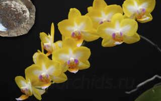 Зола для орхидей — эффективная подкормка