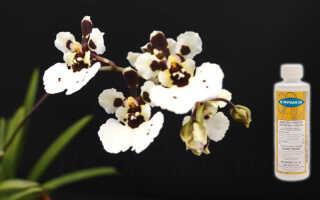 Препарат для орхидей – Физан 20