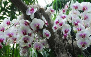 Где растут и как выживают красотки — орхидеи в дикой природе?