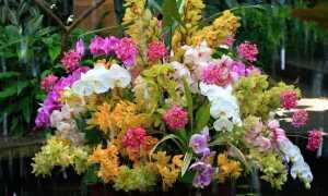 Орхидея в доме — наблюдения предков, значение цветов и приметы