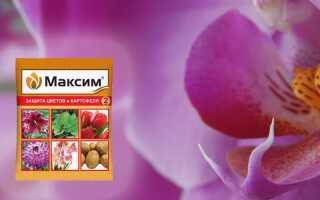 Препарат «Максим» для орхидей