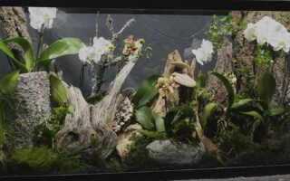Флорариум для орхидей — уникальный мини сад дома