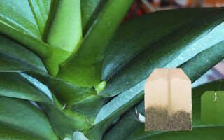 Чай для подкормок орхидей