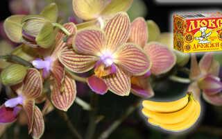 Банановая и дрожжевая подкормка для орхидей