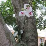Белая орхидея на стволе дерева