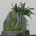 Орхидея на камне