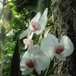 Белый цветок на дереве