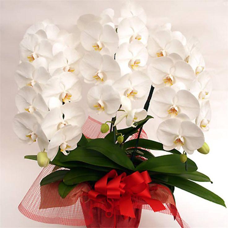 Картинки букетов с белыми орхидеями