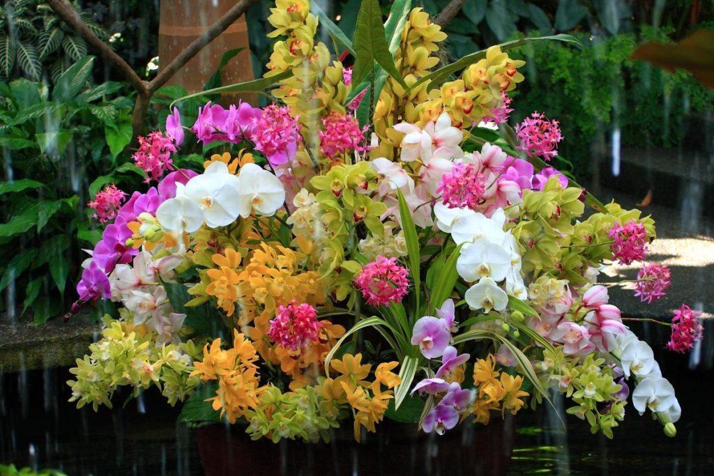 Букет из разных орхидей