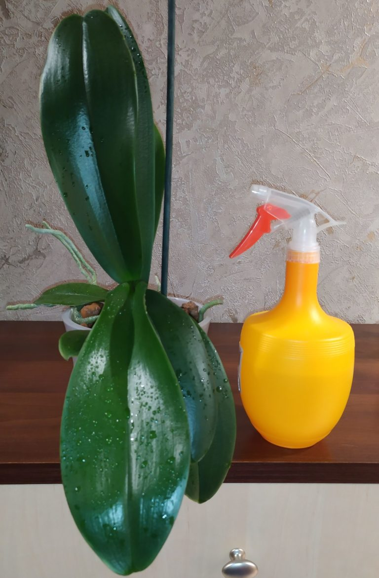 Подкормка орхидей внекорневая