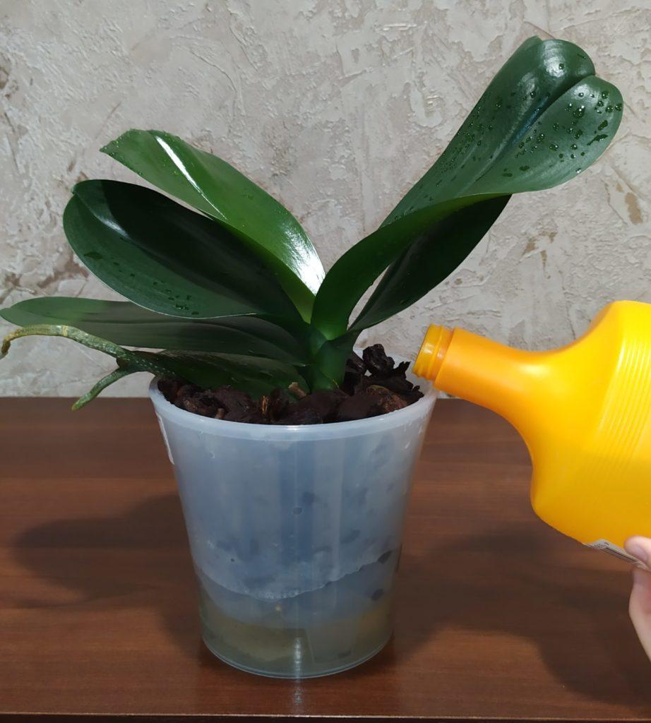 Подкормка орхидеи корневая
