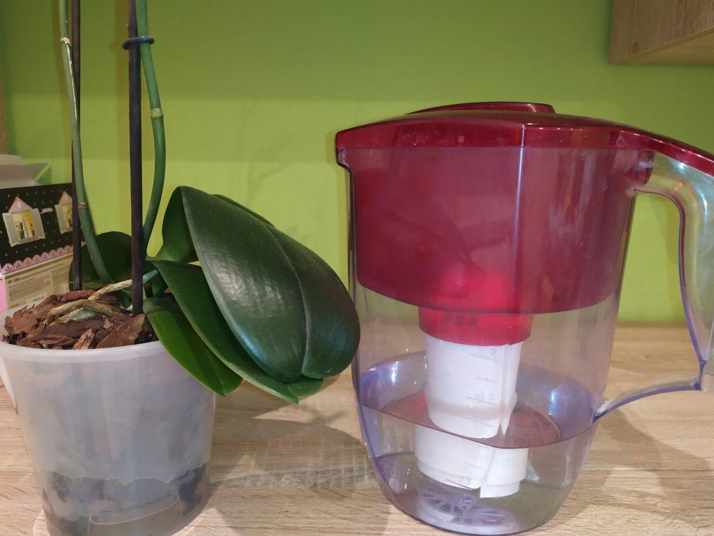 Качество воды для полива орхидей