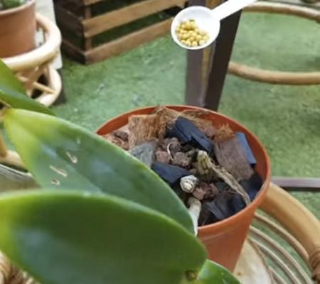 Применение осмокот для орхидей