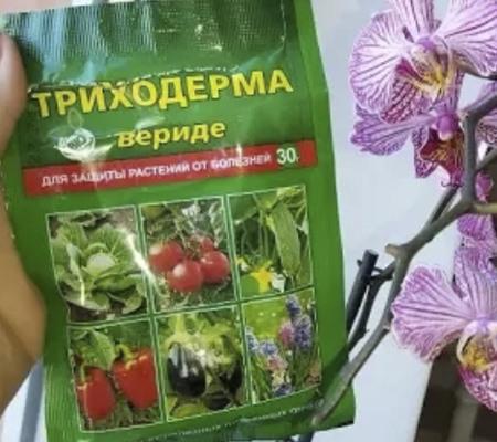 Триходерма для орхидеи