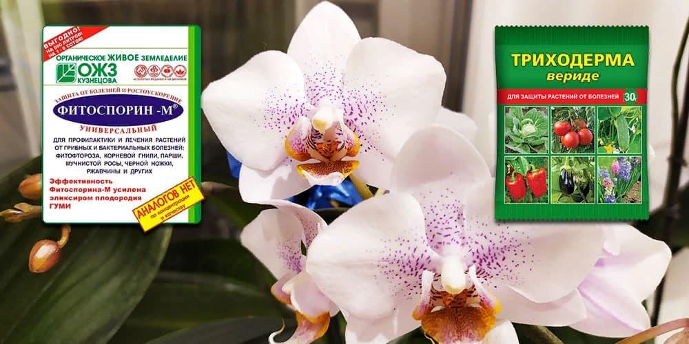 Фитоспорин и Триходерма для орхидей
