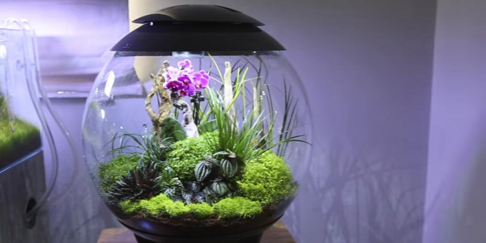 Флорариум для орхидей10