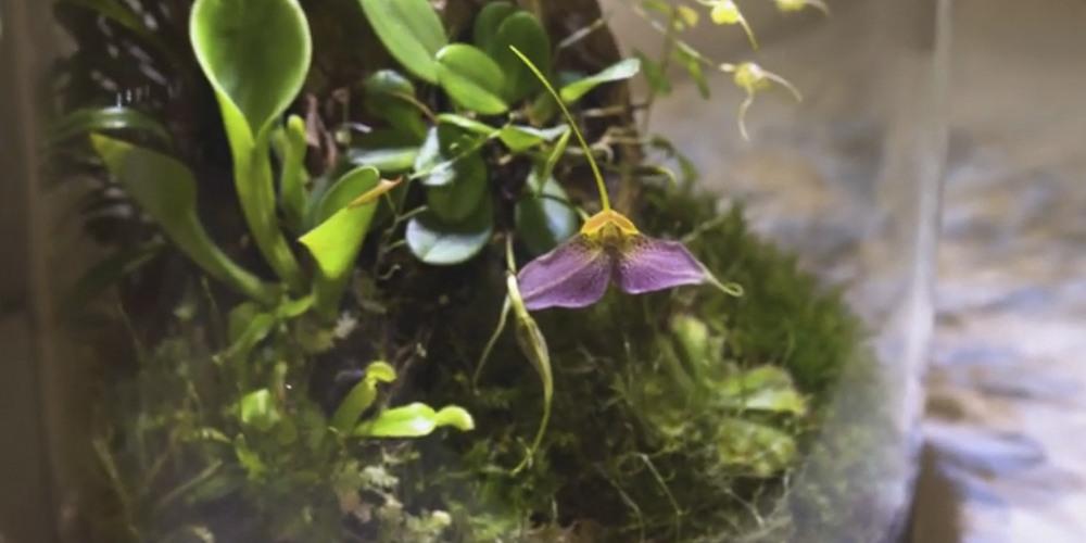 Флорариум для орхидей11