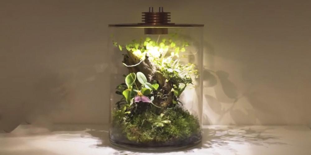 Флорариум для орхидей12