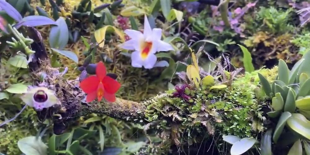 Флорариум для орхидей13