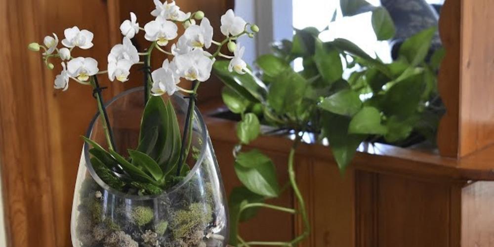 Флорариум для орхидей9