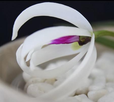 Leptotes bicolor1