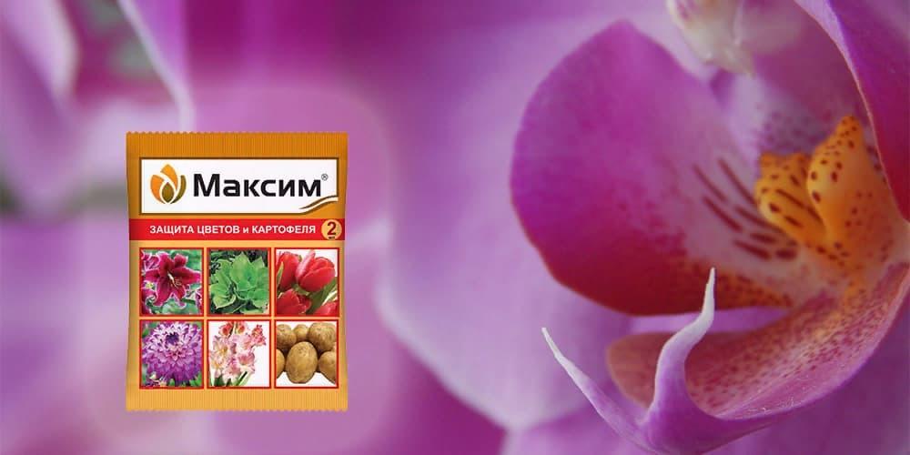 Максим для орхидей