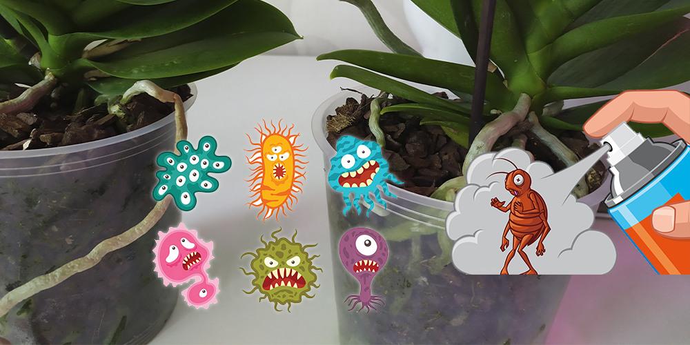 Профилактические обработки орхидей от насекомых