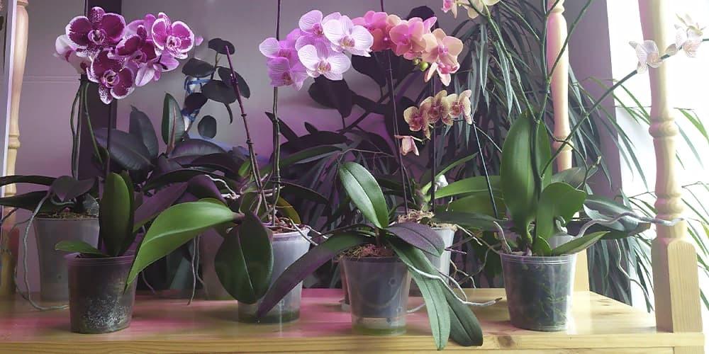 Стеллаж для орхидей1