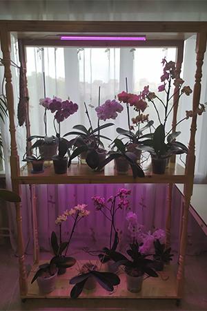 Стеллаж для орхидей3