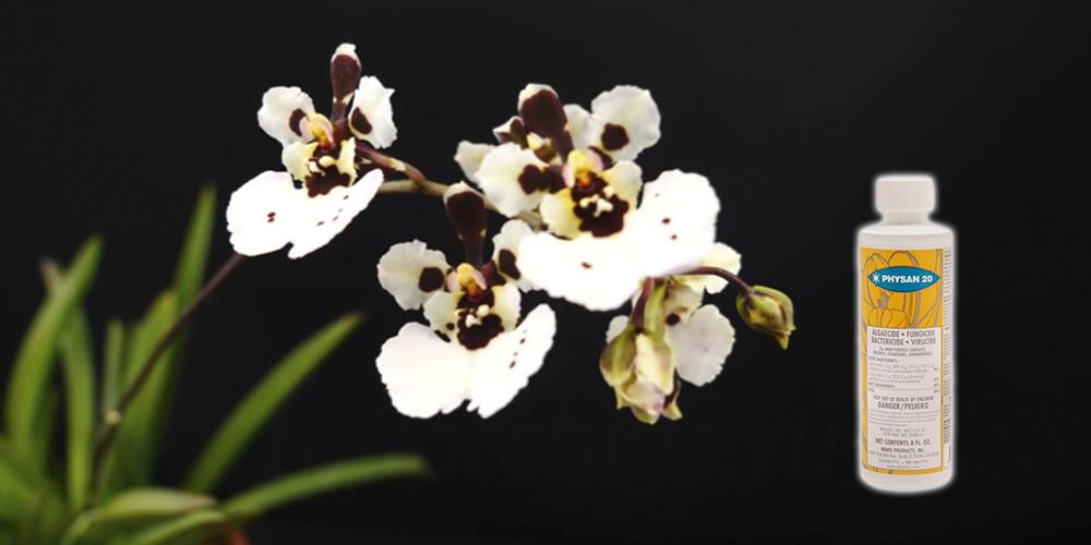 Физан 20 для орхидей