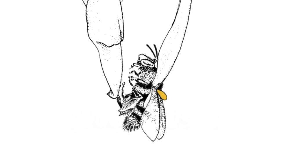 Пчела зацепляет колонку с семенем