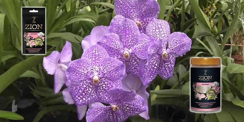 Цион для орхидей 1