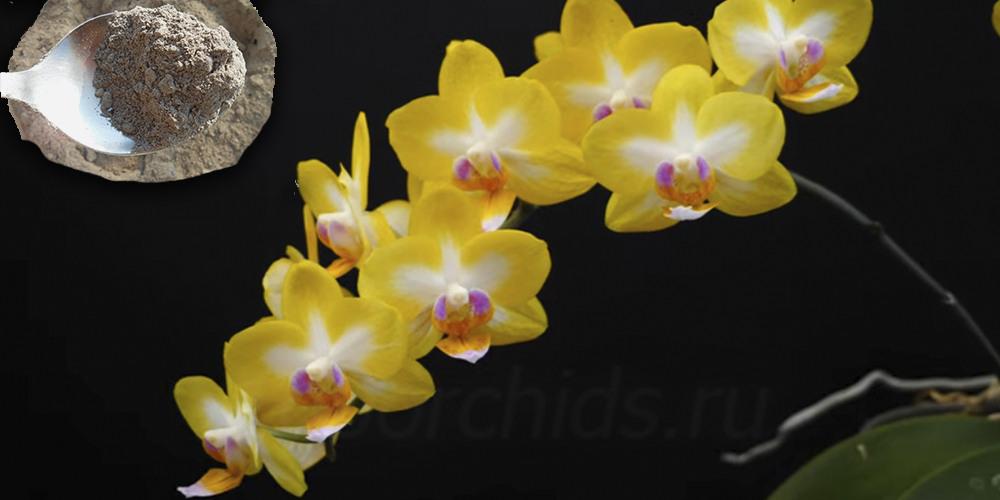 Зола для орхидей