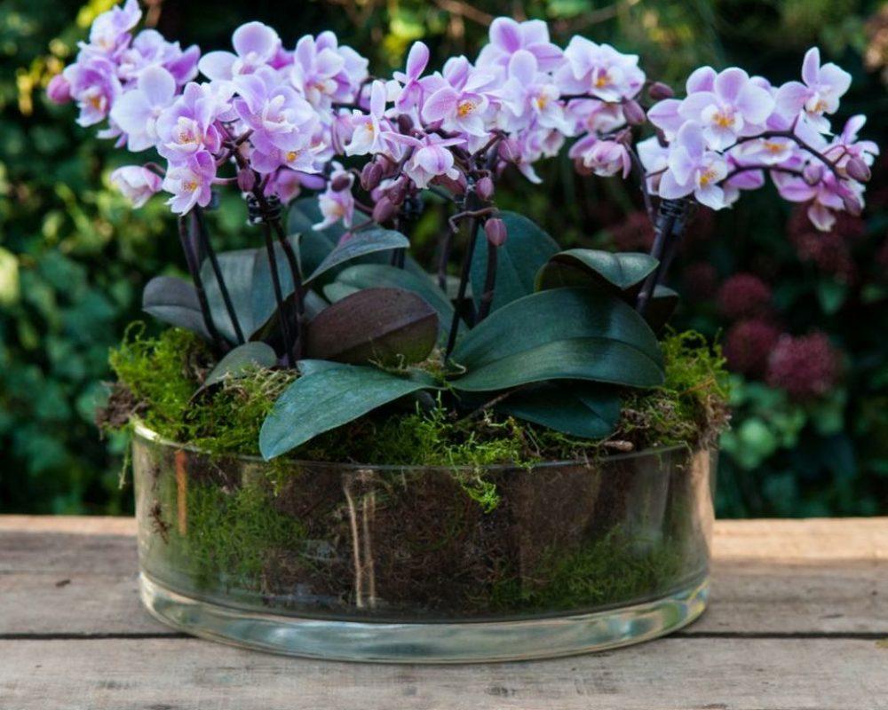 Групповая посадка орхидей111
