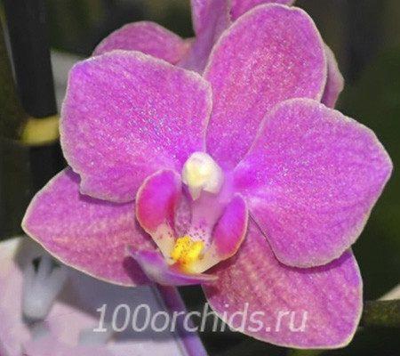 Diffusion aroma mini орхидея фаленопсис