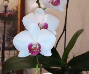 Выбор горшка в зависимости от вида орхидей