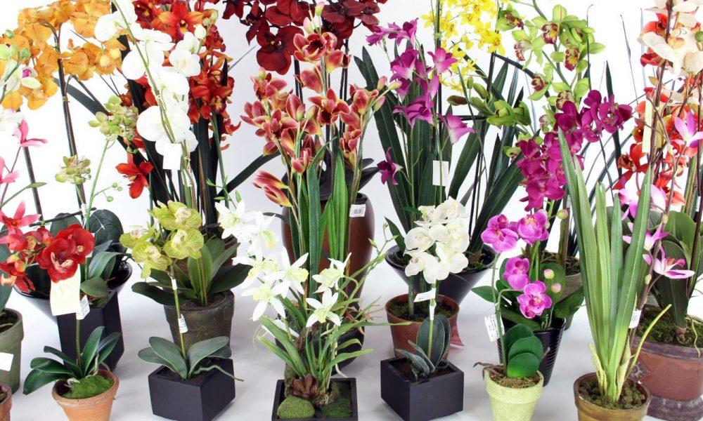 Орхидеи выбор горшка
