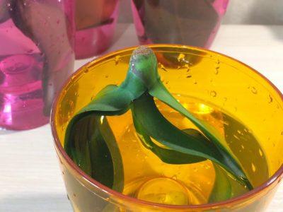 Реанимация орхидеи листьями в воде