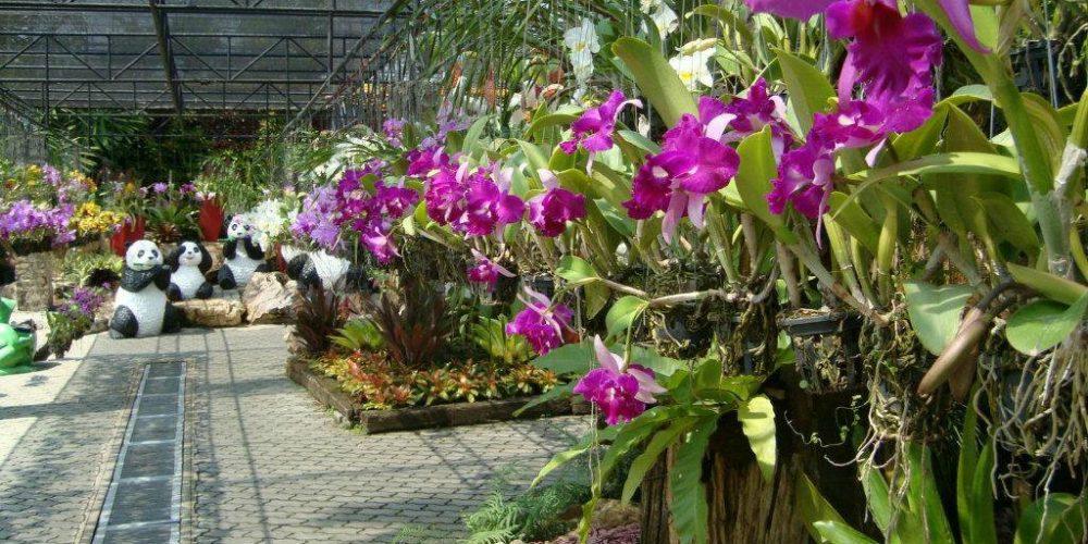 Орхидеи в саду Паттайи