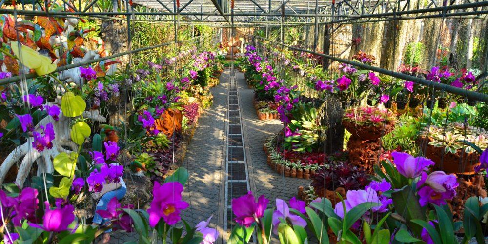 Разные орхидеи в парке