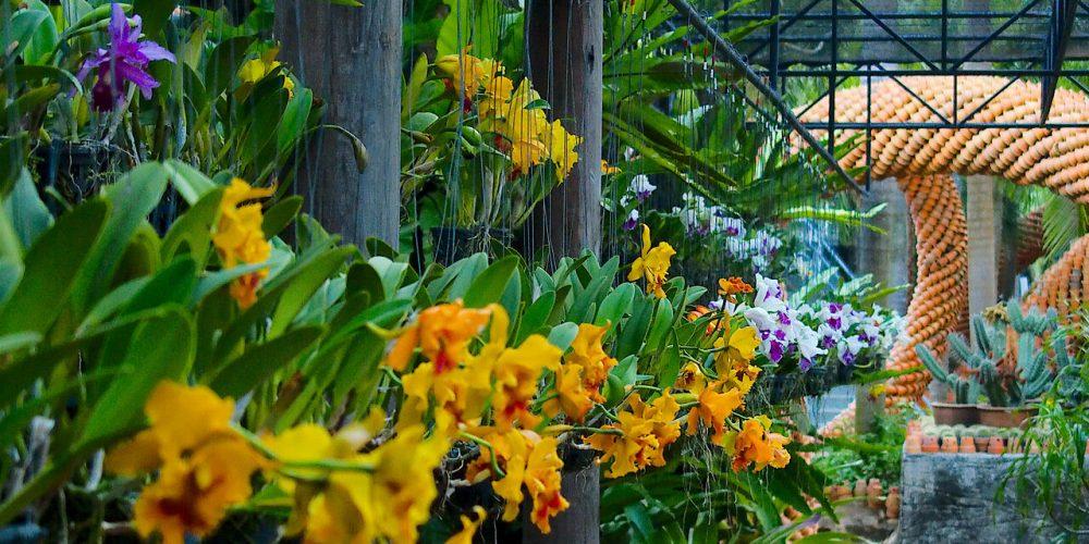 Парк с орхидеями в Паттайе