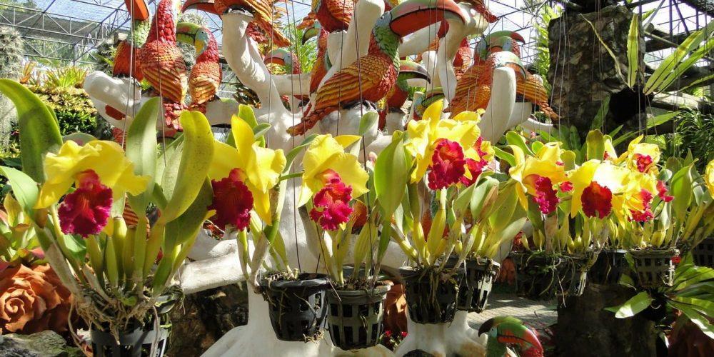 Орхидеи в парке Тайланда