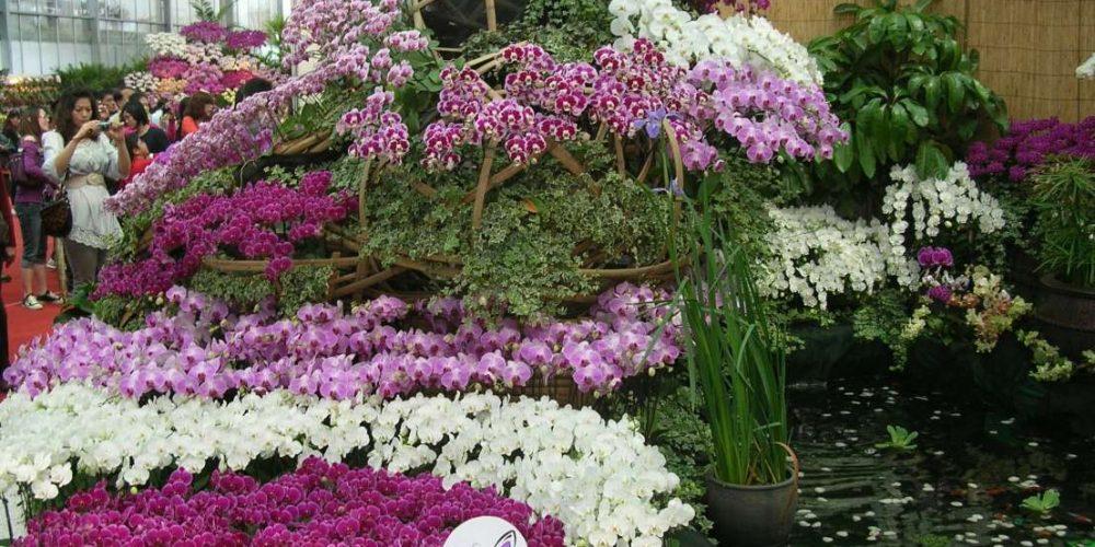 Разные окрасы орхидей