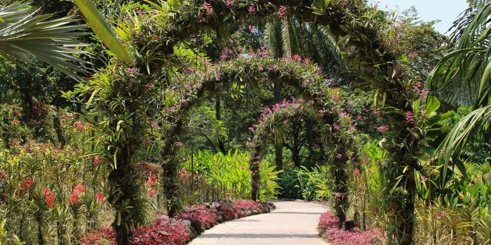 Аллея в парке Сингапура