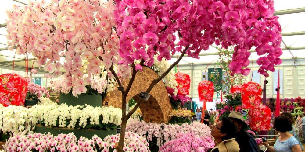 Пышное цветение орхидей