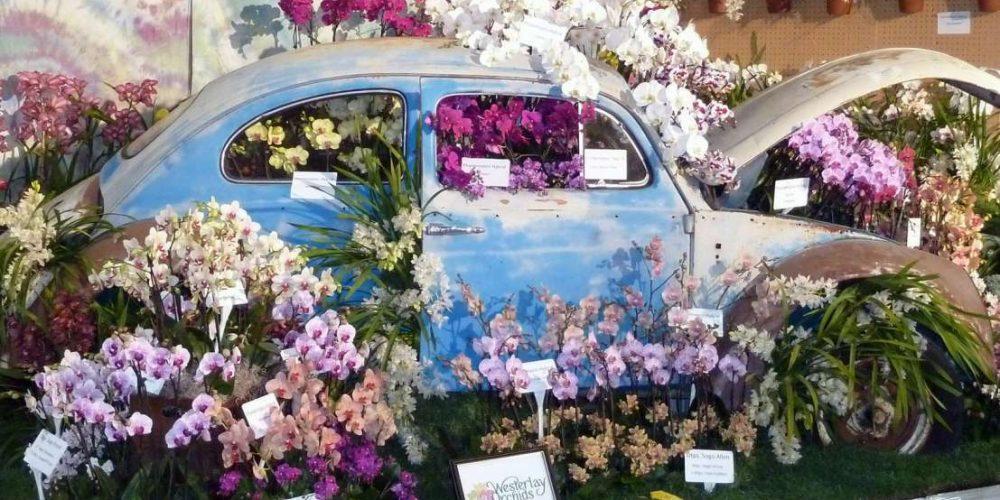 Орхидеи и машина