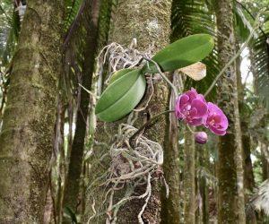 Орхидеи растут на дереве