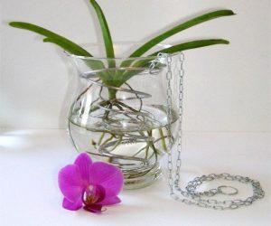 Посадка орхидеи без грунта в воде