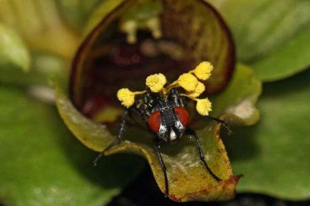 опыление орхидеи в природе